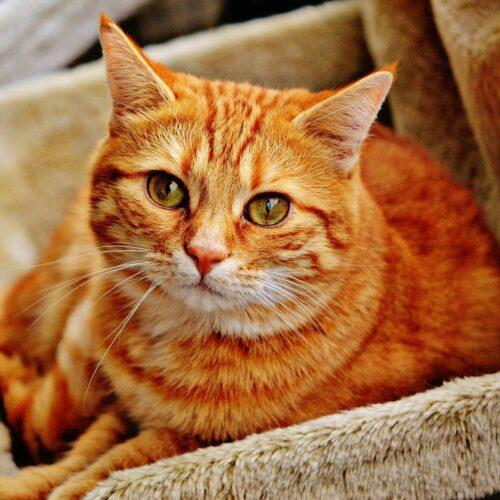 Koreańska firma chce rozwiązać problem nadwagi u domowych kotów. Ponad połowa z nich ma zbyt dużą masę ciała