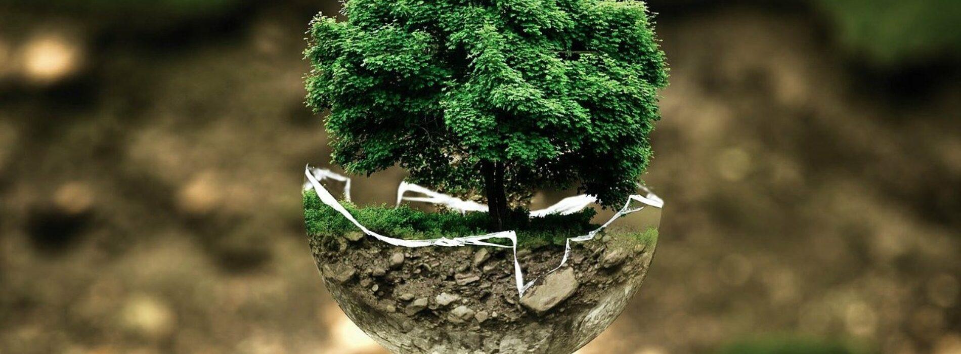 Prawie połowa Polaków chce żyć bardziej ekologicznie, nawet jeśli oznacza to wyrzeczenia